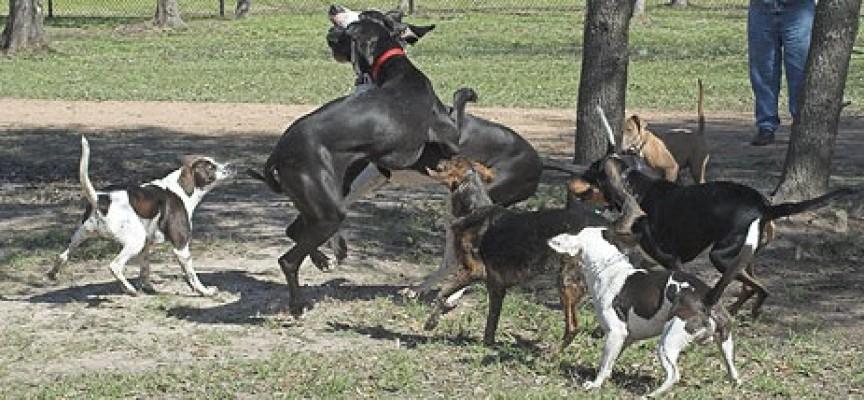Zašto se neki psi slažu, a neki ne