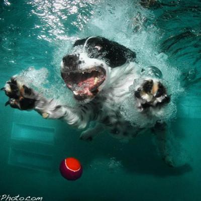 Fotografije pasa pod vodom – interesantan i human projekat