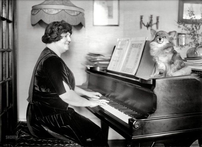Slike pasa iz (novije) američke istorije
