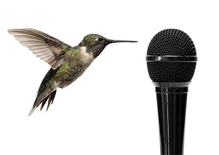 bird-with-microphone