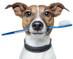 brushing-dog-teeth-resized-600