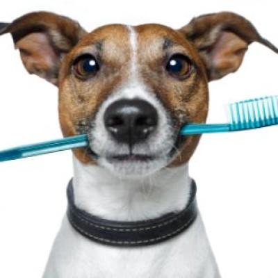 Oralna higijena: 5 saveta za zdrave zube štenca