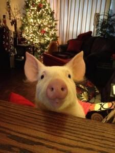ester the wonder pig 2