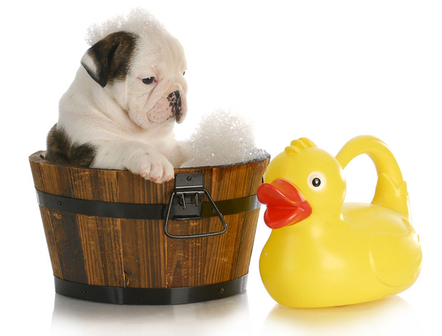 kupanje psa 1