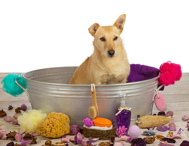 kupanje psa 3