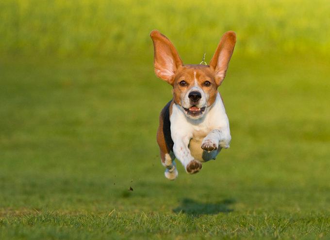 Kako naučiti psa da dođe na poziv?