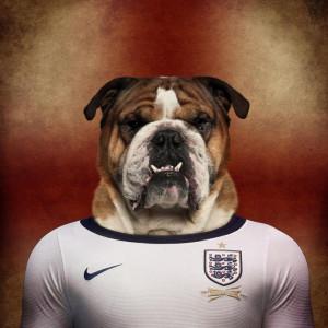 Engleska - engleski buldog
