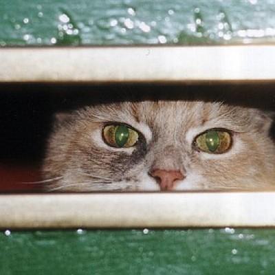 """Mačka koja """"brani"""" kuću od računa"""