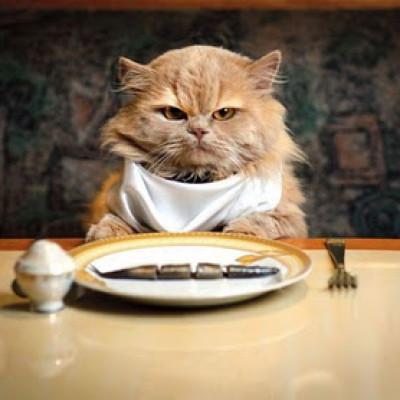 Pravilna ishrana mačaka: Da li vaša ljubimica ima problem sa težinom?