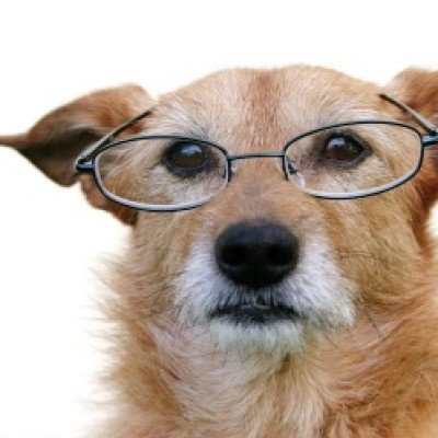 Kako negovati starijeg psa?
