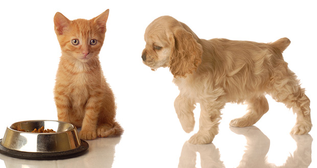pas i macka u stanu 5