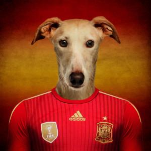 Španija - španski hrt