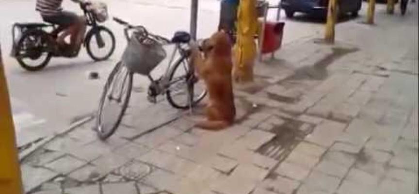 Kakav pas! Čuva bicikl dok gazda nije tu, a zatim se i odveze na njemu (VIDEO)