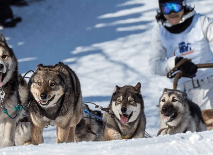 Beringija 2014: Najveća trka pasa u Rusiji