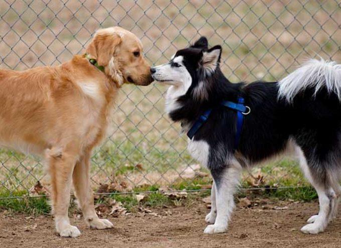 Kako upoznati dva psa?