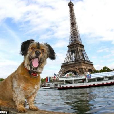 Kućni ljubimci u Francuskoj dobili prava kao živa bića
