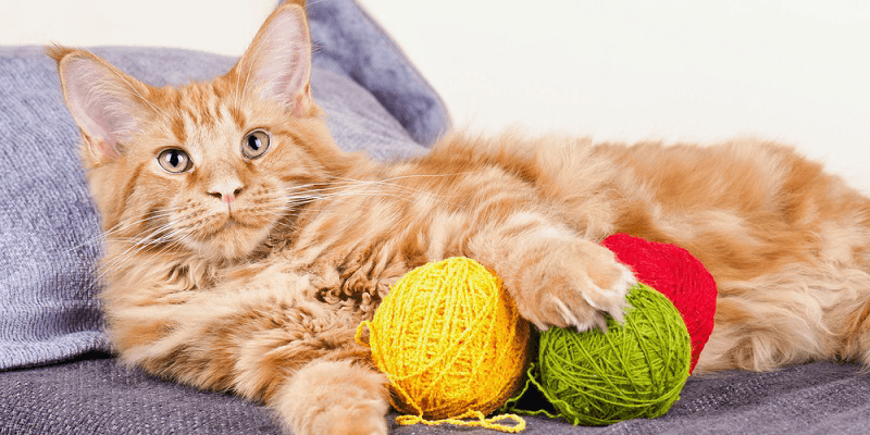 Preparing-Your-Home-for-a-New-Kitten