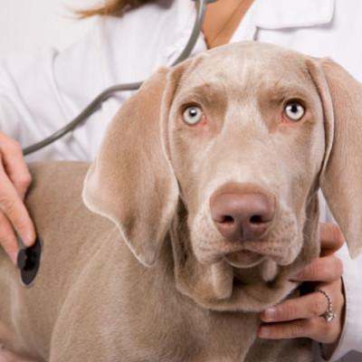 Kako ublažiti odlazak kod veterinara?