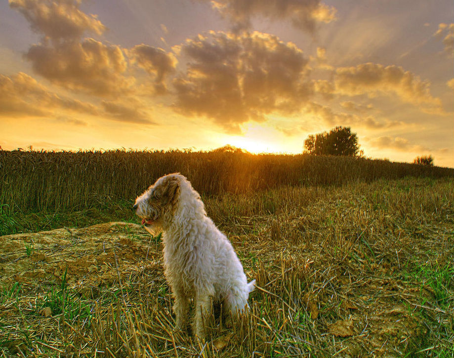 pas u selu