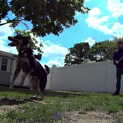 Pas rekorder u preskakanju dvostruke vijače
