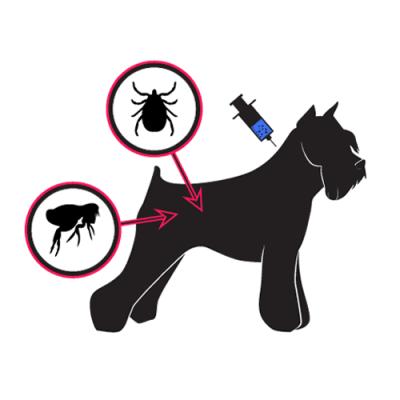 Kako zaštititi psa od krpelja i buva
