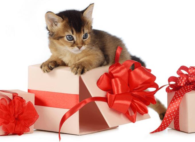 10 saveta za buduće vlasnike mačaka
