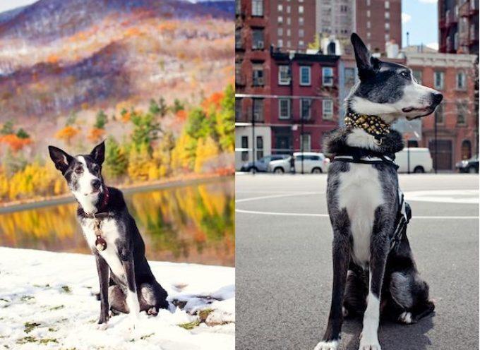 Seoski ili gradski život za psa?