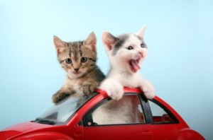 macka i voznja