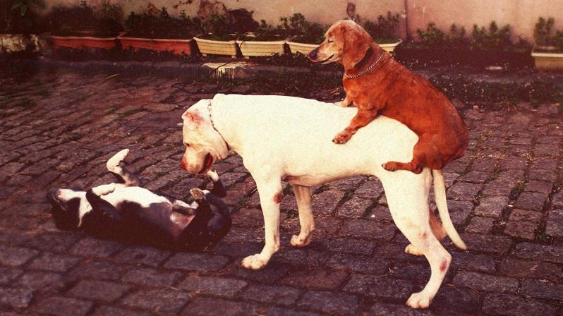 psi na gomili2
