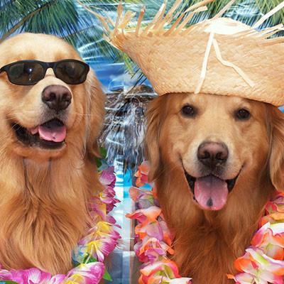 Kako (i da li) povesti psa sa sobom na odmor?