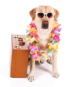 Dog_Vacation_1