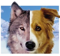 pas i vuk komunikacija ocima