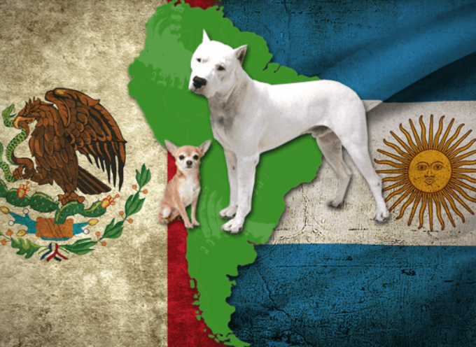 Psi Južne Amerike