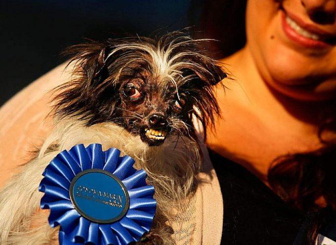 Izabran najružniji pas na svetu za 2014. godinu