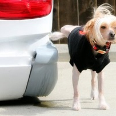 Kako naučiti psa da nuždu vrši napolju?