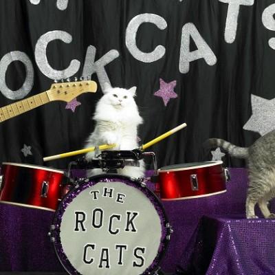 The Rock Cats: Neobičan muzički sastav (VIDEO)