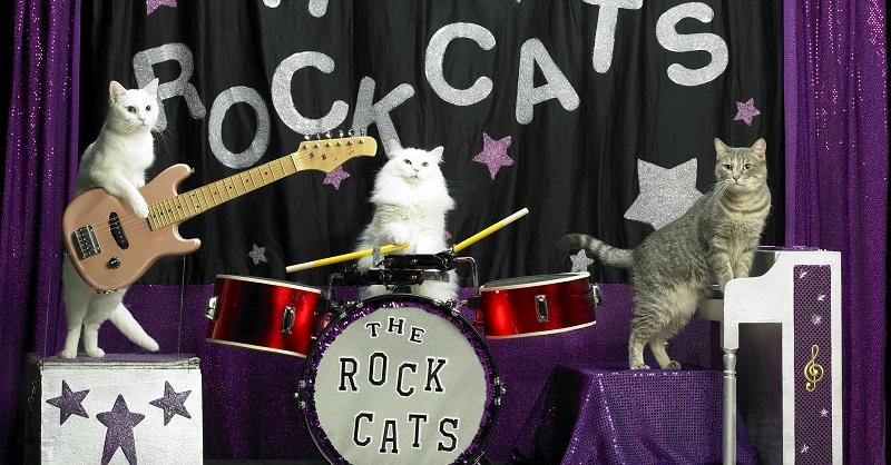 New-RockCats-cropped - Copy