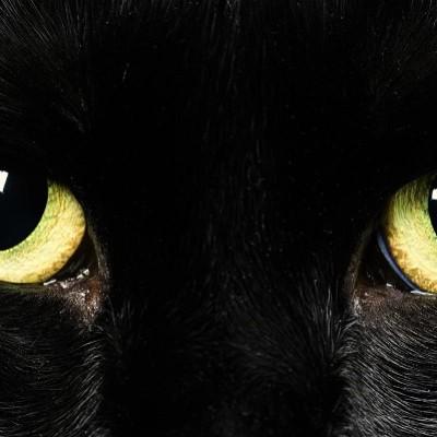 Da li mačke vide u potpunom mraku?