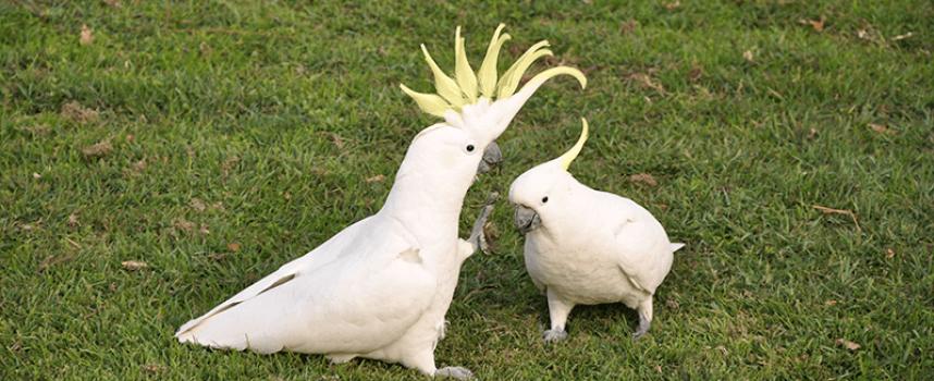 Govor tela: Kako ptice komuniciraju