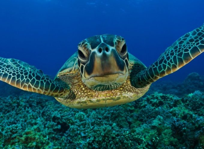 Zanimljive činjenice o kornjačama