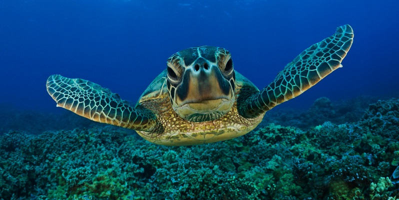 sea-turtle-relaxation