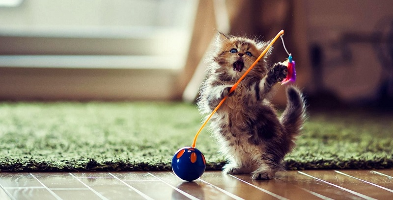 cute-little-kitten-cat-playing
