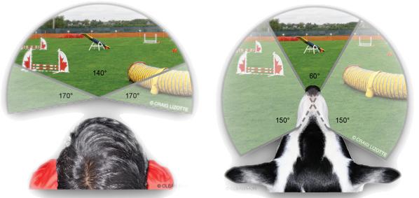 2.vidno polje pas covek