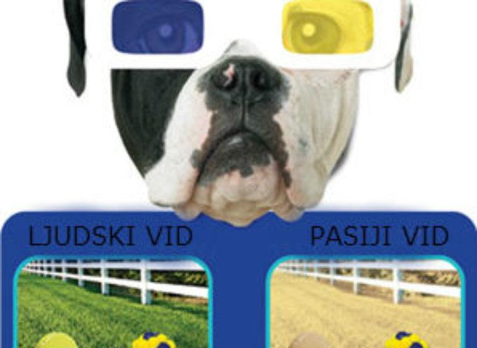 Kako psi vide svet?