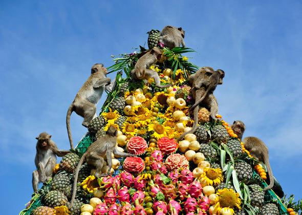 gozba za majmune
