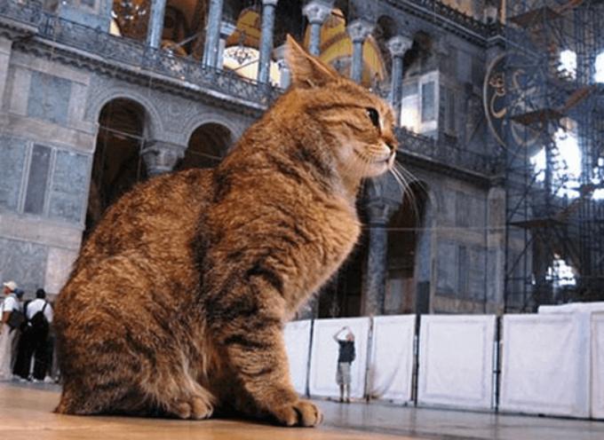 Zašto mačke vladaju u Istanbulu?