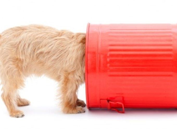 Zašto psi vole da kopaju po kanti za đubre?