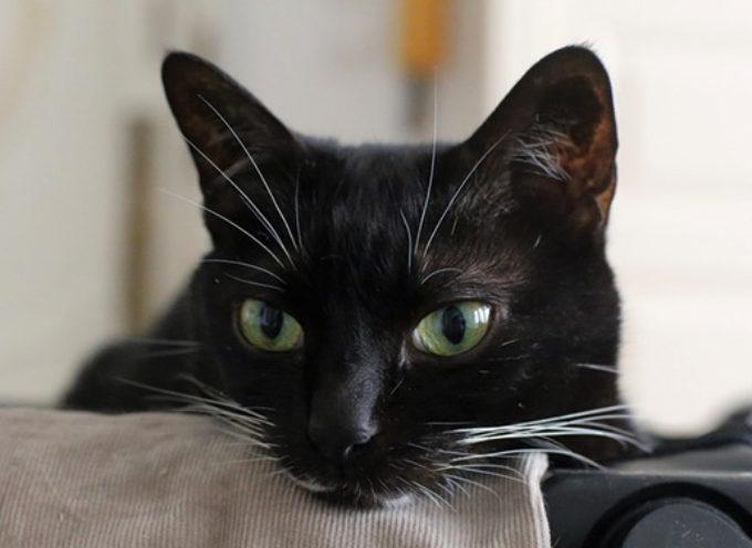 Mačke reaguju na naše emotivne signale.
