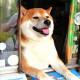 Pas pomaže vlasnici da vodi kiosk u Japanu