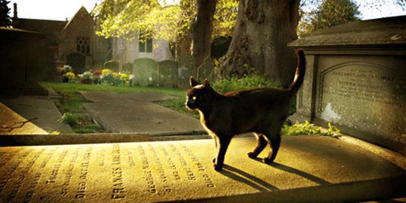 black cat grave